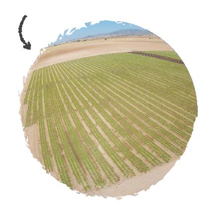 Proceso-Productivo-nuestros-campos-Agromontes-13